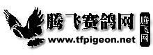 腾飞赛鸽网